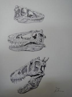 """Vývojová stadia druhu Tyrannosaurus rex na základě fosilních objevů různě starých exemplářů. Nahoře mládě ve věku asi 2 až 4 let, uprostřed tyranosauří """"teenager"""" ve věku 10 až 12 let a dole mladý dospělec ve věku přibližně 20 let. Objevíme jednou také fosilie embrya samotného druhu T. rex? Kredit: Vladimír Rimbala, ilustrace pro autorovu knihu Legenda jménem Tyrannosaurus rex"""