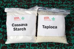 I u nás lze koupit potraviny z podzemních hlíz manioku též známého jako tapiok nebo kasava. Otrava kyanidem z dovážených produktů nehrozí. Přesto je nemá moc smysl kupovat. Mouka ani škrob z obrázku nejsou nutričně zajímavé nebo unikátní suroviny. Kredit: International Institute of Tropical Agriculture CC BY-NC 2.0