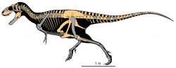 Diagram zobrazující tvar těla a dochované fosilní elementy kostry druhu Teratophoneus curriei. Holotyp představoval nedospělého jedince o délce asi 6 metrů a odhadované hmotnosti kolem 667 kilogramů. Nápadným znakem je relativně krátká a vysoká lebka tohoto tyranosaurida. Kredit: Loewen M. A., Irmis R. B., Sertich J. J. W., Currie P. J., Sampson S. D., PLoS ONE a Wikipedie (CC BY 2.5)