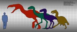Forusrakos (zelená silueta) nebyl sice tak velký jako jeho příbuzný rodu Kelenken (červeně), přesto byl ale velkým opeřeným dravcem, schopným lovit menší a středně velké živočichy ve svých ekosystémech. Při výšce až 2,5 metru dosahoval odhadované hmotnosti kolem 130 kilogramů. Kredit: Shepherdfan; Wikipedie (volné dílo).