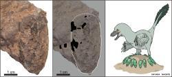 Fosilní vejce malého teropodního dinosaura (oodruh Himeoolithus murakamii), žijícího v období pozdní rané křídy (asi před 110 miliony let) na území dnešního jihozápadního Japonska. Vajíčko s rozměry 4,5 krát 2 centimetry je v současnosti nejmenším známým fosilním vejcem druhohorního dinosaura na světě. Kredit: University of Tsukuba and Museum of Nature and Human Activities, Hyogo.