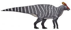 Tlatolofové byli nejspíš stádními býložravci, spásajícími nízko rostoucí tuhou vegetaci. Vyskytovali se v jižní části někdejšího subkontinentu Laramidie v době před asi 73 až 72 miliony let, tedy zhruba ve stejné době nebo mírně později, než zástupci severněji žijícího příbuzného rodu Parasaurolophus. Kredit: Joaquin Eng Ponce; Wikipedia (CC BY-SA 4.0)