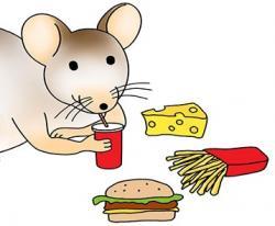 Nedostatek hormonu FGF21 znamená preferovat z potravy to sladké. Kresba Roshi Mehdibeigi, M.A.