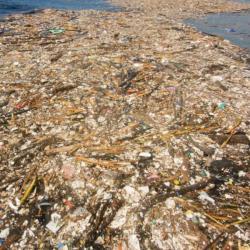 Plovoucí odpad u pobřeží Hondurasu. Kredit: Caroline Power.