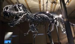 """""""Tristan"""" (či """"Tristan-Otto"""") je působivě vyhlížející kostrou dospělého exempláře druhu Tyrannosaurus rex, objevenou roku 2010 ve východní Montaně. Byl pojmenován podle synů dvou obchodníků, kteří exemplář v roce 2014 zakoupili a umožnili jeho vystavení v berlínském Přírodovědeckém muzeu. Dnes patří ke zlatým hřebům expozice tohoto muzea spolu s mnohem starším africkým brachiosauridním sauropodem druhu Giraffatitan brancai. Kredit: Chris Alban Hansen, Flickr a Wikipedie (CC BY-SA 2.0)"""