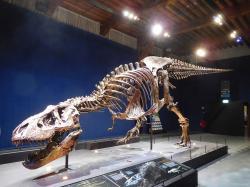 """""""Trix"""" je dalším velmi dobře zachovaným exemplářem dospělého tyranosaura, objeveného v sedimentech souvrství Hell Creek na východě Montany. S předpokládaným věkem přes 30 let a délkou kolem 12 metrů je jedním z nejstarších a největších známých jedinců druhu T. rex. V současnosti probíhá intenzivní výzkum jeho fosilní kostry, který nám snad brzy odhalí další zajímavosti o tomto """"králi tyranských ještěrů"""". Kredit: Rique, Wikipedie (CC BY-SA 4.0)"""