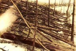 Stromy pokácené rázovou vlnou poexplozi planetky nad oblastí sibiřské říčky Tunguskyroku 1908. Množství uvolněné energie při této události je téměř nepředstavitelné, přesto jde ale o pouhý slabý vánek proti apokalypse, která nastala na konci křídy.Kredit:Snímek Leonida Kulika, Wikipedie (volné dílo)