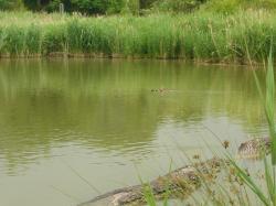 Typick� rybn�k s nepr�hlednou vodou. Foto autorka textu