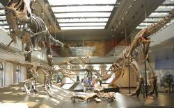 Expozici Muzea přírodní historie v Los Angeles doplňují hned tři jedinci druhu T. rex v různých stadiích ontogeneze. Koprolit z Kanady patřil nepochybně dospělému nebo přinejmenším odrostlému subadultnímu jedinci. Dinosaurus, který se stal jeho kořistí, vážil zhruba od 200 do 750 kilogramů. Kredit: Maarten Heerlien; Wikipedie (CC BY 2.0)