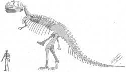 První publikovaná rekonstrukce kostry druhu Tyrannosaurus rex (holotyp CM 9380) z roku 1905 od paleontologa Williama Dillera Matthewa. Tato ilustrace doprovázela popisnou studii H. F. Osborna, oficiálně publikovanou 4. října stejného roku. Není divu, že veřejnost na počátku 20. století byla takovým výjevem ohromena. Kredit: AMNH digital library; Wikipedie (volné dílo)