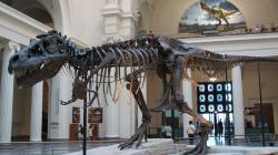 """Je úžasné, jak se vědcům daří rekonstruovat zvířata, která neměla to štěstí aby se dostala na Noemovu archu. Na obrázku je """"Sue"""", největší známý jedinec tyranosaura, foto Steve Richmond, Wikipedia, CC BY 2.0)"""