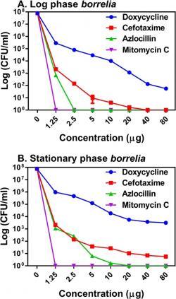 Obrázek ukazuje efektivitu několika antibiotik včetně azlocillinu v zabíjení spirochet při různých koncentracích. Vrchní část se zabývá působením na spirochety v logaritmické fázi (exponenciální fáze růstu) a dolní část na spirochety ve stacionární fázi.  Kredit: Pothineni, V.R., Potula, HH.S.K., Ambati, A. et al. Azlocillin can be the potential drug candidate against drug-tolerant Borrelia burgdorferi sensu stricto JLB31. Sci Rep 10, 3798 (2020). https://doi.org/10.1038/s41598-020-59600-4   CC BY 4.0.