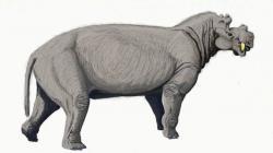 Rekonstrukce pravděpodobného vzezření živého uintatéria. Zpočátku by nám nejspíš hodně připomínal hrocha nebo nosorožce, při bližším pohledu na jeho hlavu bychom ale byli rychle vyvedeni z omylu. Tito až několik tun těžcí savci obývali v průběhu eocénu velkou část severní polokoule. Kredit: Dmitrij Bogdanov; Wikipedie (CC BY-SA 3.0)