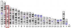 DNA polymeráza theta(Polθ)jeenzym, který u lidí je kódovánPOLQgenem umístěným na třetím chromozomu.  (Kredit: Wikipedia, volná doména).