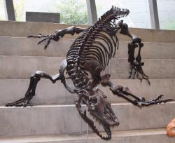 Rekonstruovaná kostra obřího pleistocénního varana druhu Megalania prisca v expozici Muzea v Melbourne. Ačkoliv o jeho přesných rozměrech zatím probíhají debaty, je prakticky jisté, že byl podstatně větší než dnešní varan komodský. Žil na území Austrálie v době před asi 1,5 milionem až 50 tisíci lety. Kredit: Cas Liber; Wikipedie (volné dílo)