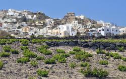 Stará vinice u Akrotiri na Théře (Santorini). Kredit: LBM1948, Wikimedia Commons.