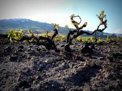 I takhle může vypadat zdroj nejlepšího thérského vína. Kredit: Exmc2, Wikimedia Commons