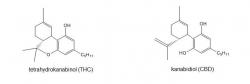 THC a CBD vznikají ze stejné molekuly, proto jsou si tak podobné. Kredit: www.hemps.cz