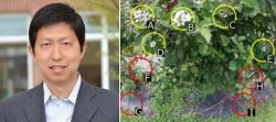 """Gu Yu, vedoucí výzkumného kolektivu s ukázkou jak v  nasnímaném obrazu algoritmus """"vybírá vhodné květy"""". Kredit: Gu Yu, West Virginia University."""