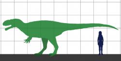 Yutyrannus huali je v současnosti největším známým živočichem s přímo dochovanými doklady pernatého pokryvu těla. V dospělosti dosahoval tento teropod délky asi 9 metrů a hmotnosti až kolem 1,5 tuny. Byl tedy přibližně stejně velký jako mnohem pozdější severoameričtí albertosaurini. Kredit: Conty, Wikipedie (CC BY-SA 3.0)