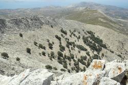 Diovy duby z vrcholu hory. Kredit: Zde, Wikimedia Commons. Licence CC 4.0.
