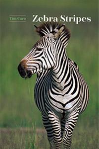 """Obálka knihy """"Zebra Stripes"""", v níž loni Tim Caro formuloval účel průhů, jako optického repelentu. (Kredit: University of Chicago Press, Chicago)."""