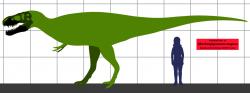 Konzervativní odhad velikosti holotypu Z. magnus na základě porovnání s proporcemi příbuzných tyranosauridů. Ve skutečnosti mohl být tento jedinec ještě přibližně o 10 % větší. Pokud obří obratle nalezené ve stejném lomu patřily rovněž tomuto druhu, pak šlo nejspíš o obra ve velikostní kategorii největších známých jedinců druhu T. rex. Kredit: Conty, Wikipedie (CC BY 3.0)