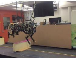 Ještě loni v září byl gepard slepý a běhat a skákat mohl jen na povely z pupeční šňůry vedoucí do super-počítače v řídícím středisku.