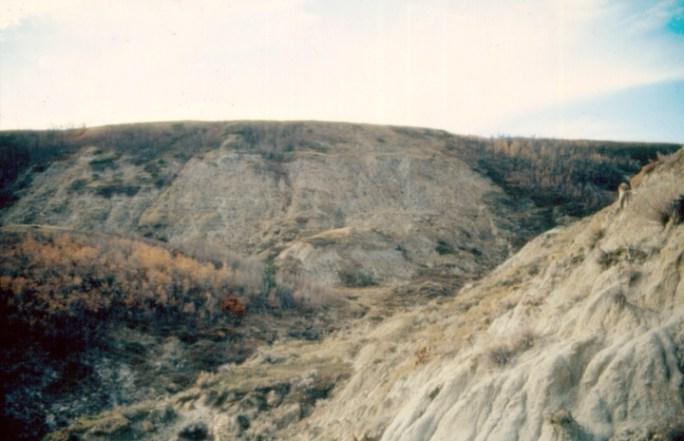 Výchozy souvrství Scollard při řečišti Red Deer River v kanadské Albertě. Právě v těchto vrstvách byl objeven zatímgeologicky nejmladší známý exemplář druhuT. rex. Žil maximálně asi 300 000 let před katastrofou K-Pg.Kredit:Anky-man, Wikipedie (CC