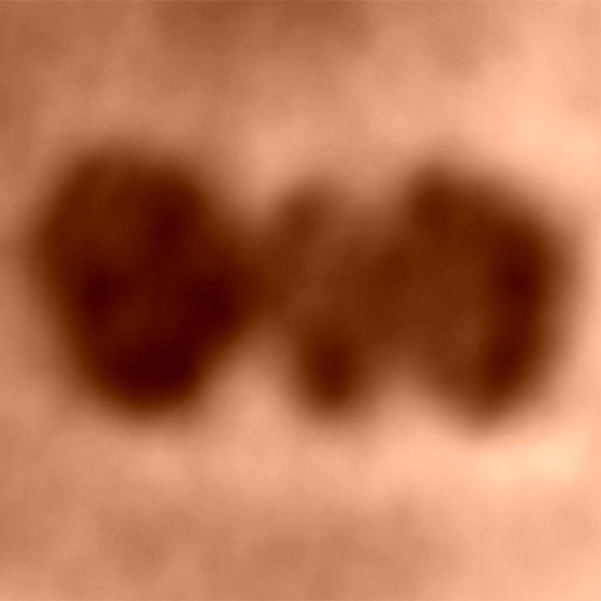 Jedna molekula cytochromu c. Kredit: Jean-Nicolas Longchamp / University of Zurich.