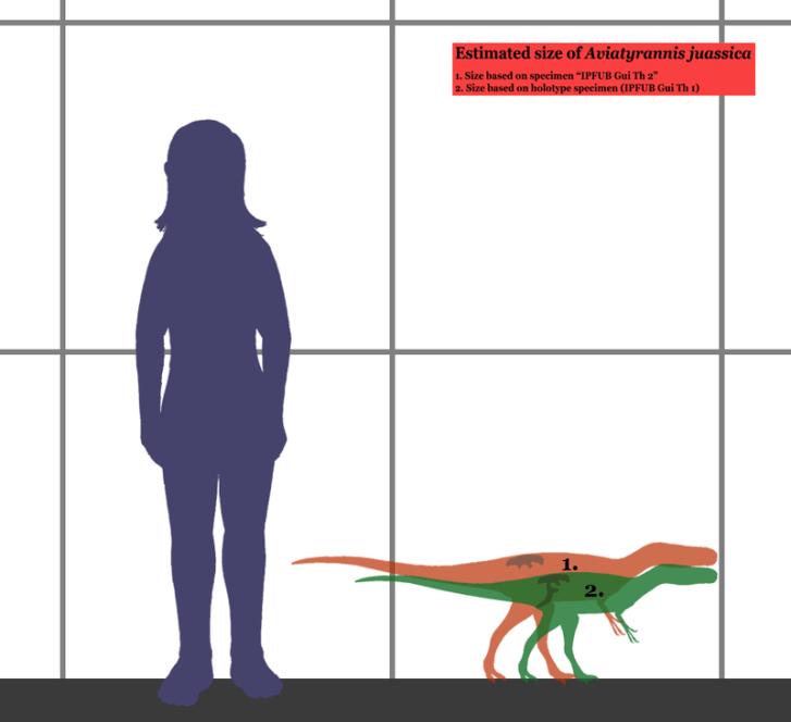 Obrázek znázorňující předpokládané tělesné rozměry dvou jedinců druhu Aviatyrannis jurassica. Tento malý portugalský teropod žil zhruba o 90 milionů let dříve než jeho vzdálený příbuzný T. rex. Byl asi desetkrát kratší a zhruba 1500krát lehčí, než je