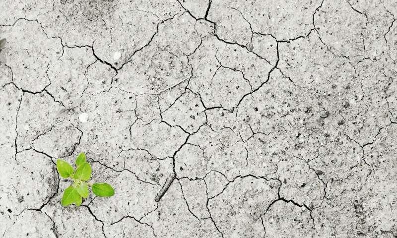 V krizových situacích je evolucí nastavená optimální hustota průduchů nevýhodou, připravuje rostlinu o nedostatkovou vodu.