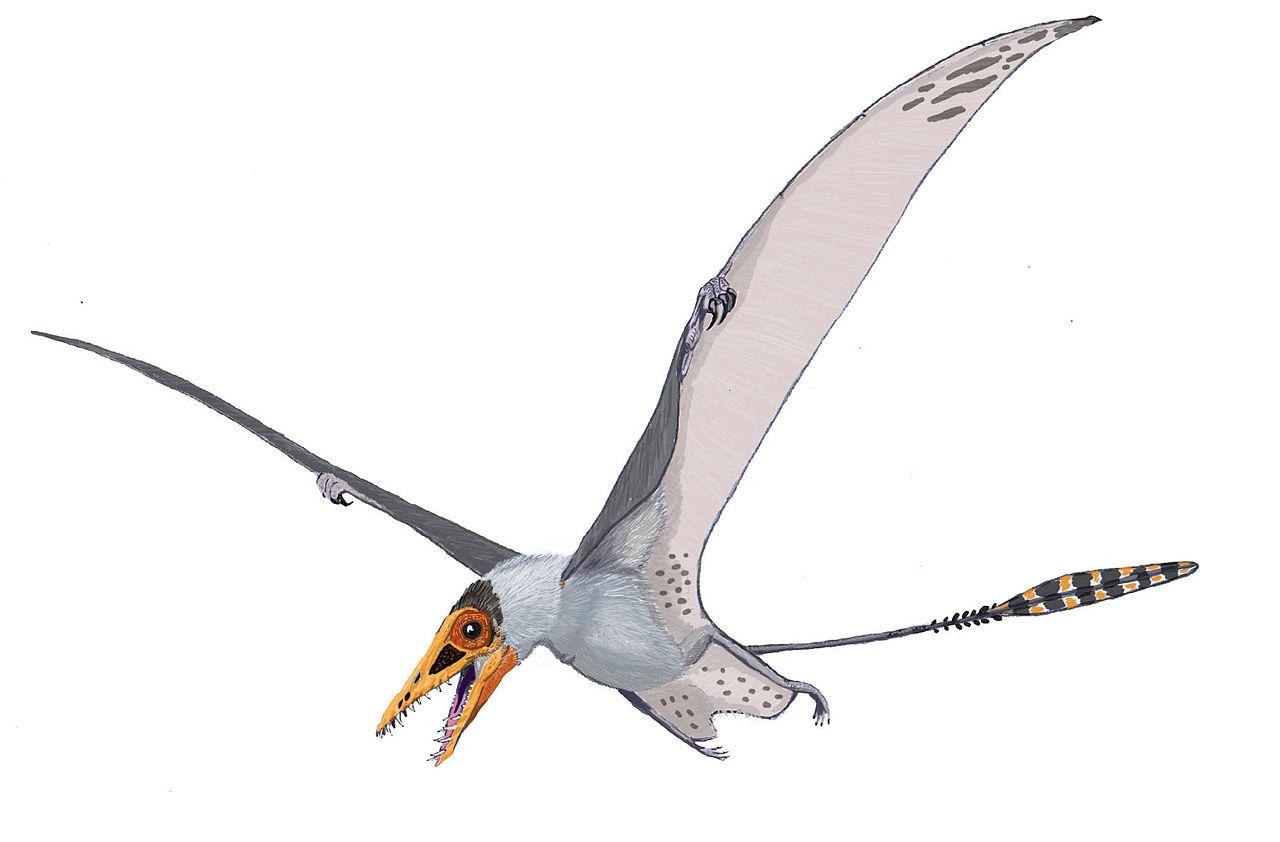 """Rekonstrukce přibližného vzezření druhuSordes pilosus, malého ramforynchoidního ptakoještěra, obývajícího oblasti Střední Asie před asi 155 miliony let. Tito malí draví letci měli tělo pokryté """"kožichem"""" z jednoduchých pykno-vláken.Kredit:Dmitrij"""
