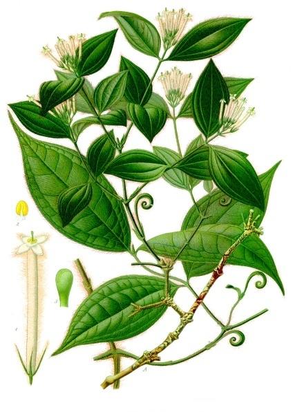 Kurare nebo také šípový jed je droga a jed bez zápachu, silně hořké chuti. Nejznámější je tubokurare obsahující D-tubokurarin. Lze ho z rostlin získat varem. Například z kulčiby jedodárné (Strychnos toxifera).  Zahušťuje se nad ohněm nebo na slunci.