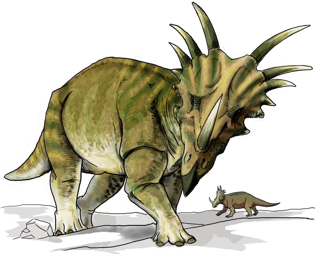 Rekonstrukce přibližné podoby živého styrakosaura. Tento robustní dinosaurus byl velký asi jako mohutný nosorožec a jeho charakteristickým znakem byly výrazné bodce (či rohy), vyčnívající z horní části jeho lebečního límce. Kredit: Lady ofHats; Wikip