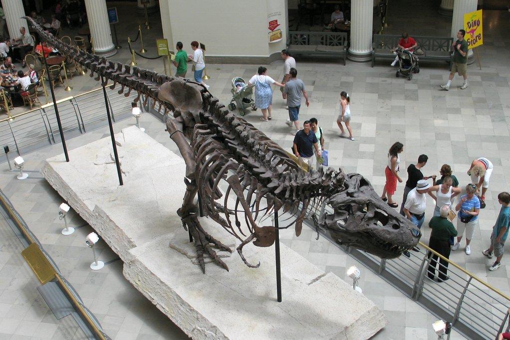 """Kostra """"Sue"""" shlíží na návštěvníky chicagského přírodovědeckého muzea již téměř 16 let. Co je to ale proti 670 000 stoletím, která předtím trávila poklidným spánkem ve svrchnokřídových horninách? Kredit: Shoffman11, Wik"""