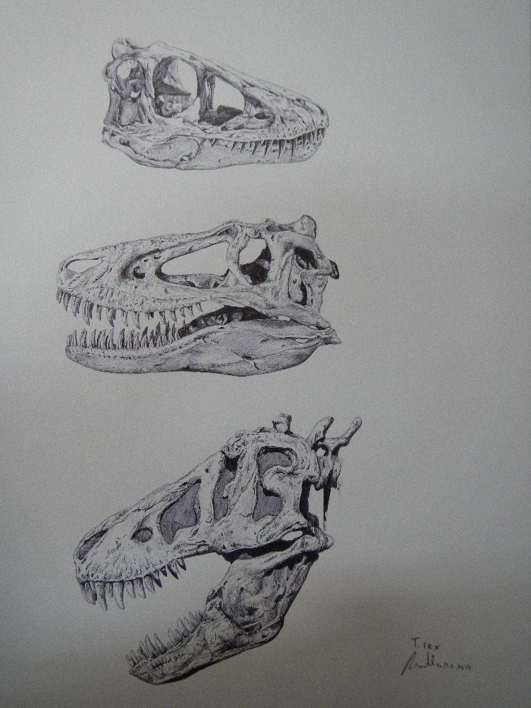"""Vývojová stadia druhu Tyrannosaurus rex na základě fosilních objevů různě starých exemplářů. Nahoře mládě ve věku asi 2 až 4 let, uprostřed tyranosauří """"teenager"""" ve věku 10 až 12 let a dole mladý dospělec ve věku přibližně 20 let. Objevíme jednou ta"""