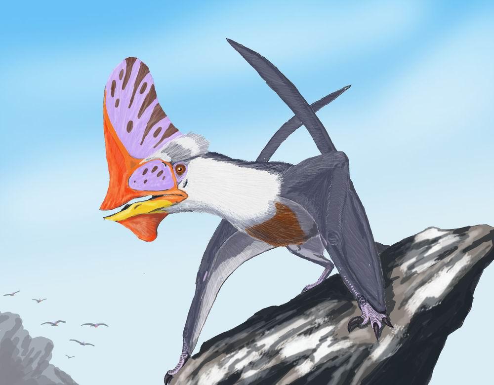 Tupandactylus navigans, jeden ze zajímavých raně křídových ptakoještěrů s výrazným lebečním hřebenem. Je nepochybné, že tito dávní létající plazi vykazovali složité chování podobně jako dnešní ptáci. Kredit: Dmitrij Bogda