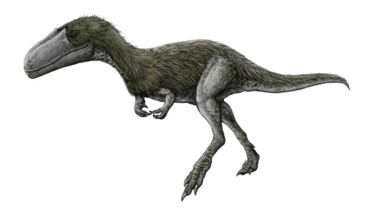 Rekonstrukce přibližného vzezření timurlengie, tyranosauroida z období počátku pozdní křídy. Tento teropod obýval oblasti současné centrální Asie v době před asi 92 až 90 miliony let a je tak pro paleontology významným příspěvkem k pochopení evoluční