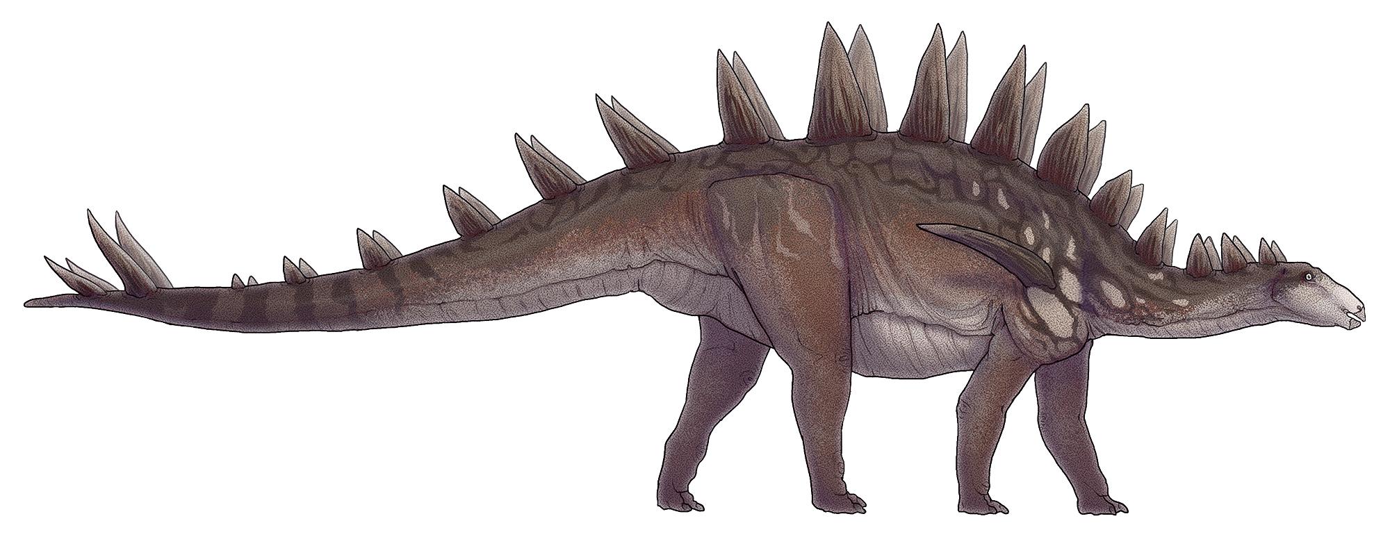 """Rekonstrukce vzezření zástupce druhu Tuojiangosaurus multispinus, jednoho z největších známých stegosaurů. Tento až 7 metrů dlouhý a téměř 3 tuny vážící """"obrněnec"""" obýval oblast dnešní Číny (provincie S'-čchuan) v době před asi 160 miliony let. Kredi"""