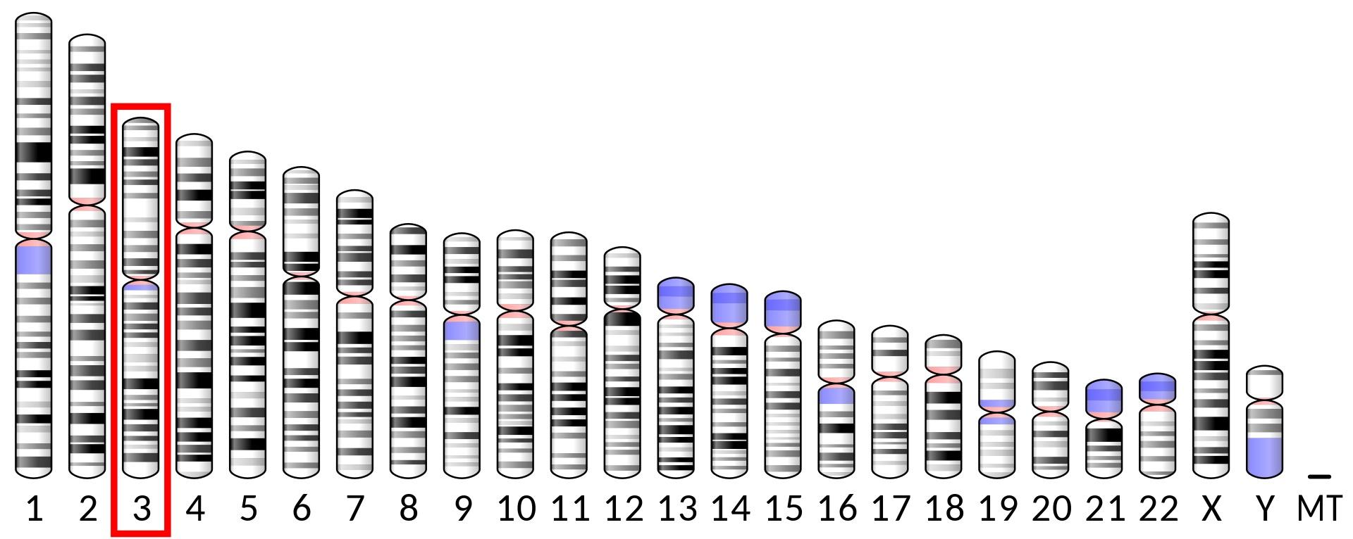 DNA polymeráza theta(Pol?)jeenzym, který u lidí je kódovánPOLQgenem umístěným na třetím chromozomu.  (Kredit: Wikipedia, volná doména).
