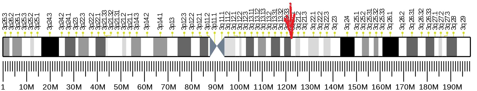 """Přesná lokalizace POLQ genu. Start: 121 431 431 bp (bp je zkratka používaná pro """"páry bází""""). Konec genu: 121 545 988 bp.(Kredit: Wikipedia, volná doména)."""