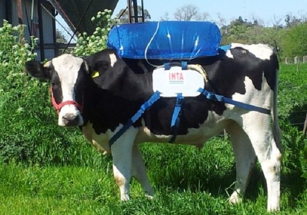 Chovatelé skotu jsou také považováni za producenty škodlivých plynů. Jejich krávy  totiž z obou svých konců, denně oteplí planetu 250 až 300 litry čistého metanu.