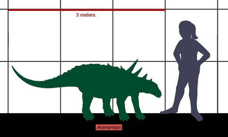 Velikostní srovnání animantarxe a člověka ukazuje, že šlo o jednoho z nejmenších známých rodů ankylosaurů. Přesto dosahoval při délce kolem 3 metrů hmotnosti asi 300 kilogramů. Kredit: Conty, Wikipedie (CC BY 3.0)