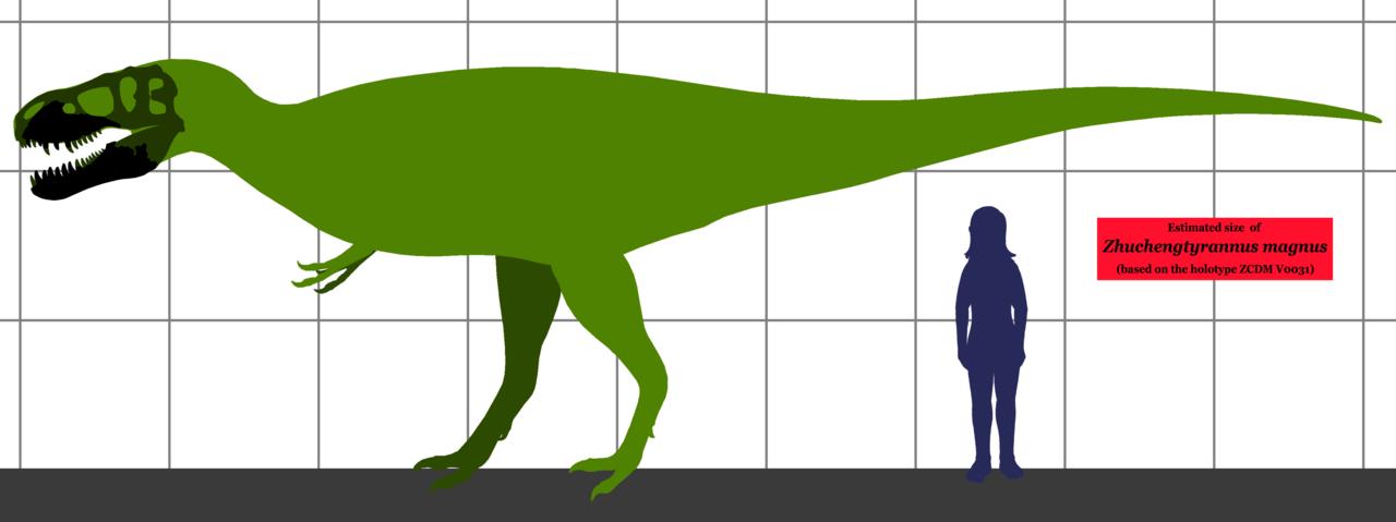Konzervativní odhad velikosti holotypu Z. magnus na základě porovnání s proporcemi příbuzných tyranosauridů. Ve skutečnosti mohl být tento jedinec ještě přibližně o 10 % větší. Pokud obří obratle nalezené ve stejném lomu patřily rovněž tomuto druhu,