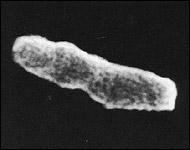 mykobakterie
