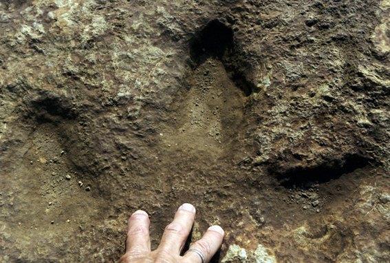 Stopa iguanodona
