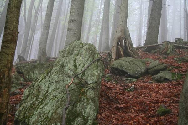 Les na Šumavě. Národní park, ale stejně je prázdný. Kredit: NP Šumava.